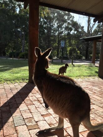 ハウスキーピングってどんな仕事? 西オーストラリアのカリバリーリゾートを例にご紹介!